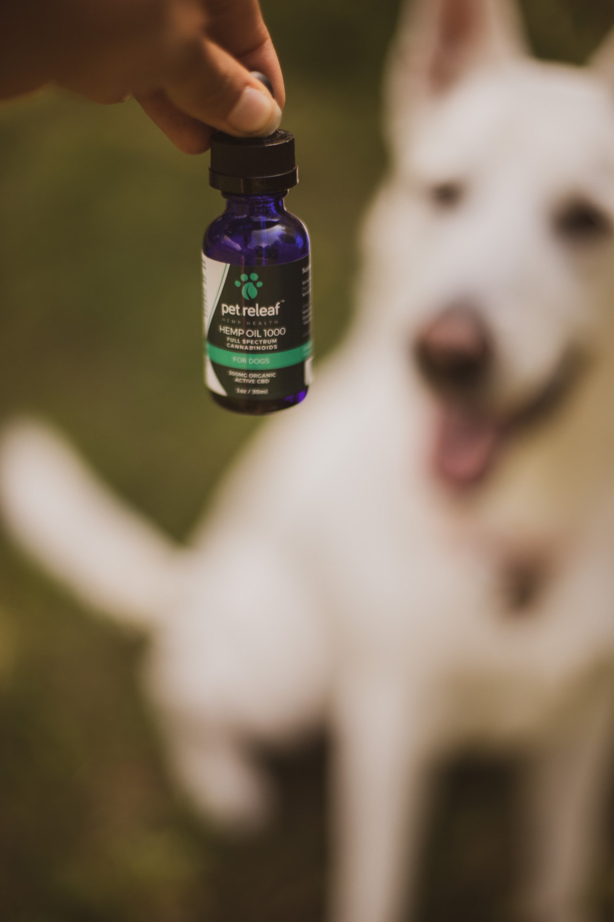 Spetsna's Sickly Winter & Pet Releaf CBD Oil Review | The
