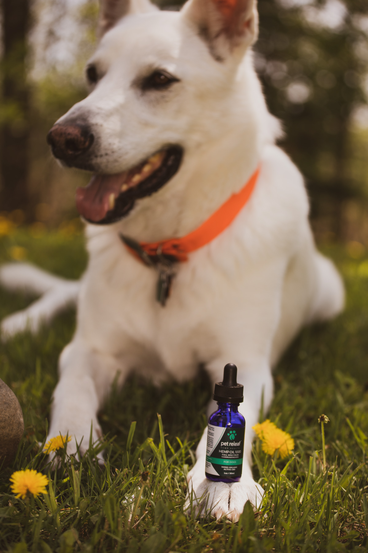 Spetsna's Sickly Winter & Pet Releaf CBD Oil Review | The Wolfdog Life